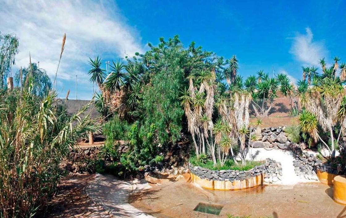 Monkey Park Tenerife Estanque