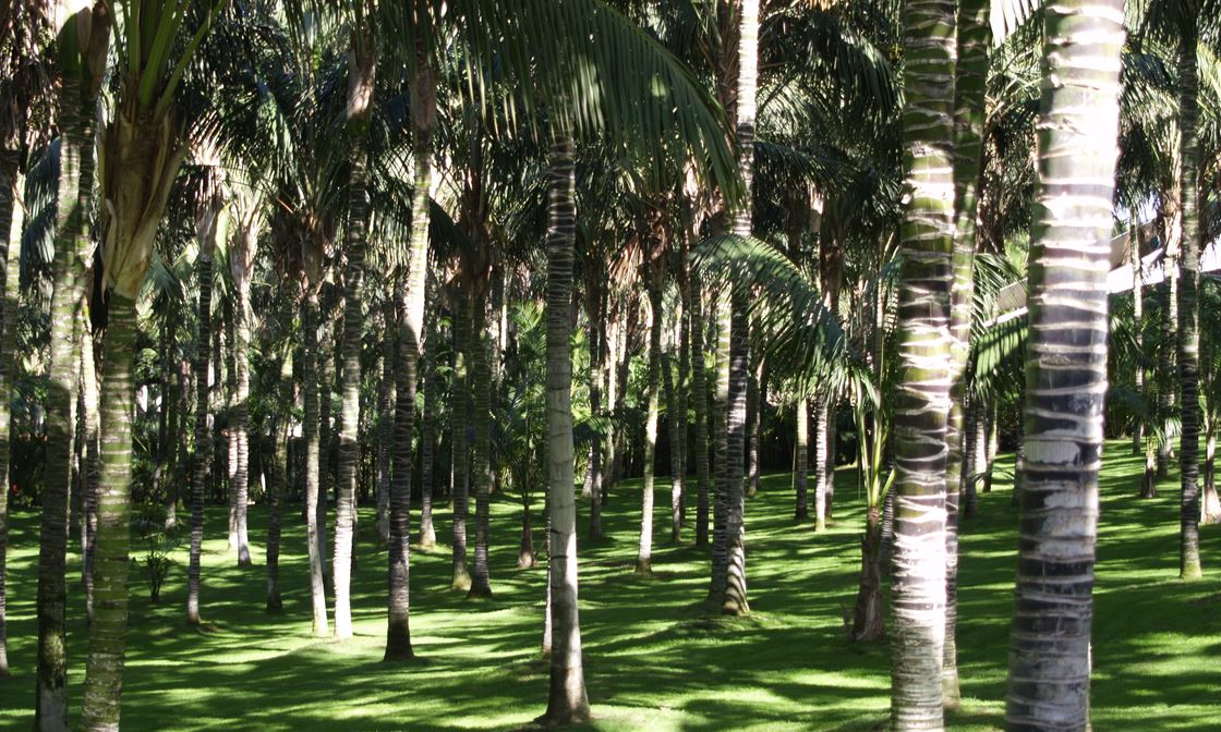 Lora Parque Dec 2007 13