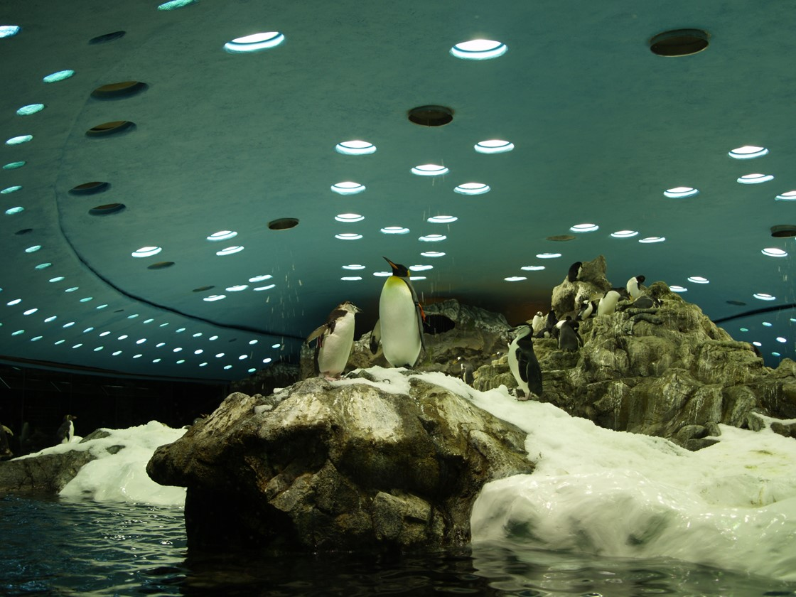 Lora Parque Dec 2007 40
