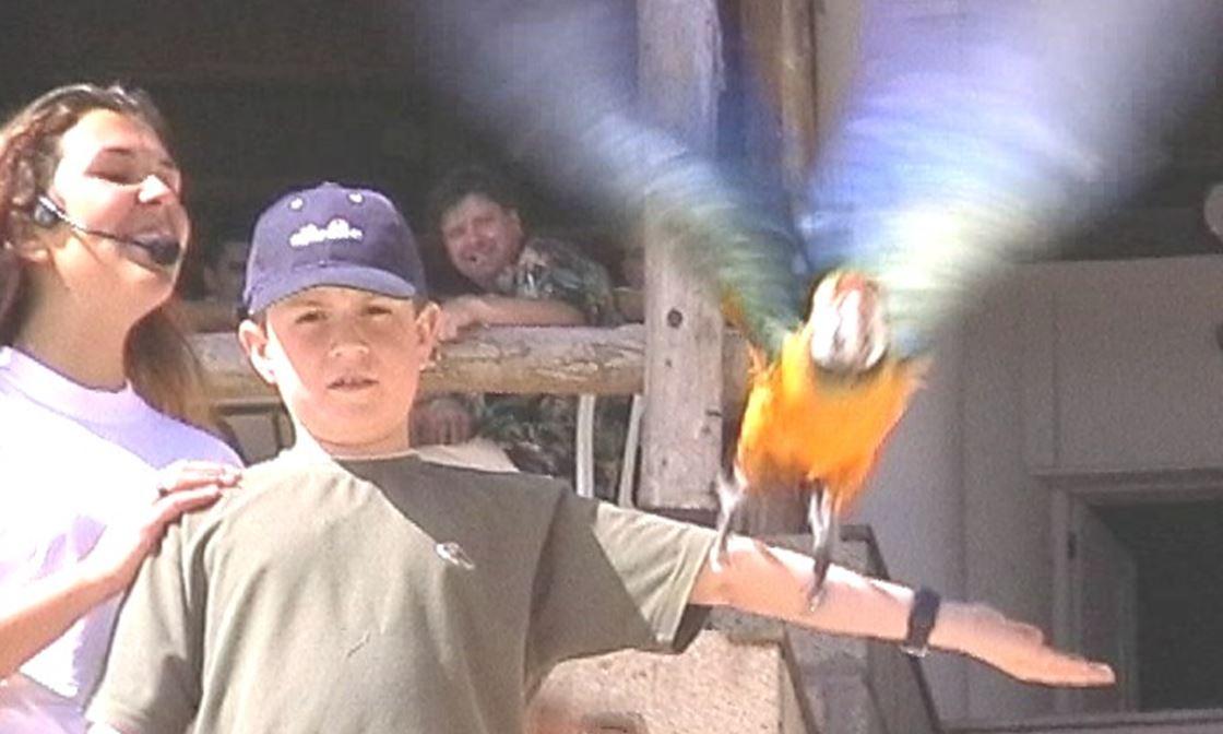 BIRDS CHRIS AT EAGLE PARK 3