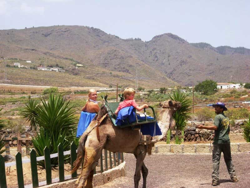 Camel Riding Camel Park