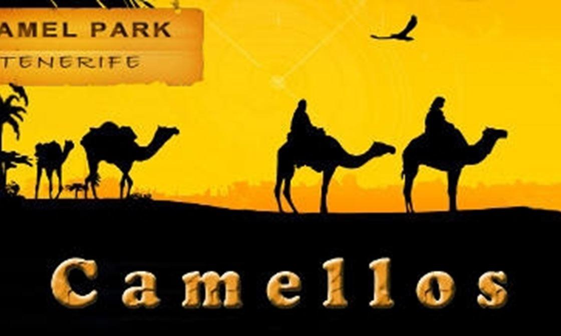 Camellos 02