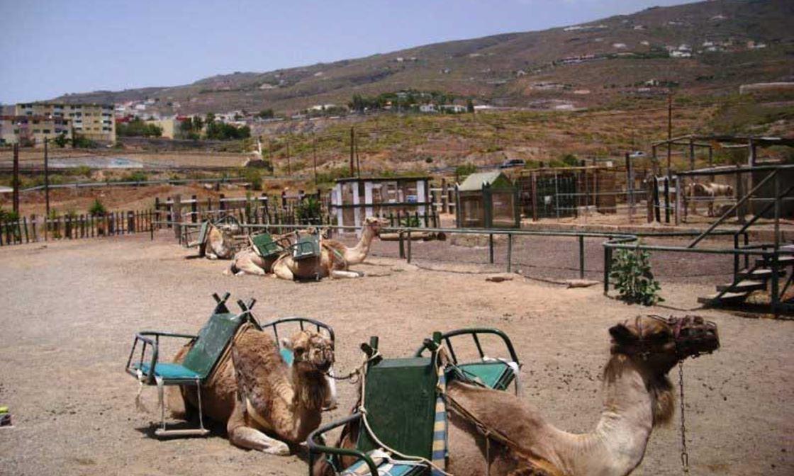 Camel Park 03
