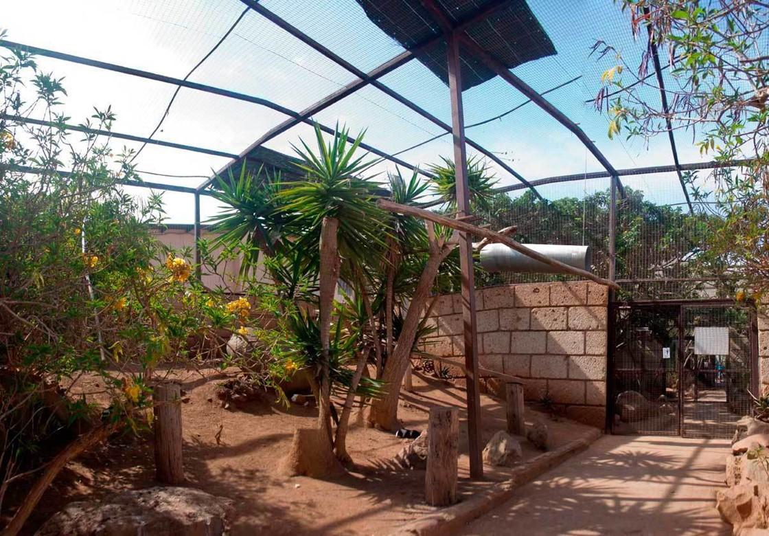 Monkey Park Tenerife Recinto 1